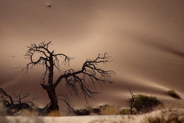namibia6